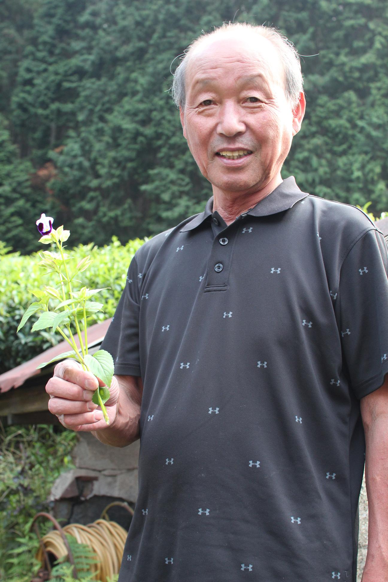 Organic Tea Farmer Sugimoto-san