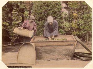 Tea processing in the Meiji period