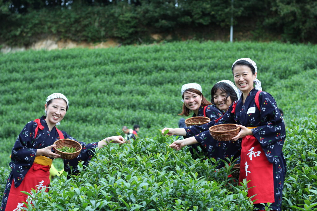 Guests cosplaying as tea-picking girls at an Obubu event - you can see the red cords holding back their kimono sleeves, just like in the song!