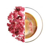 Sakura - Traditional Sakura Tea