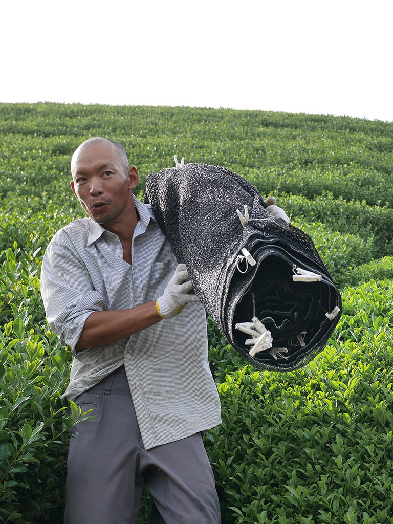 Akky-san Farming Tea