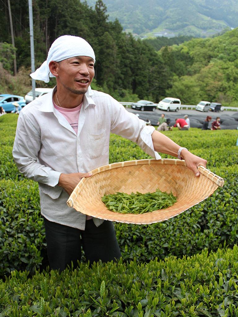 Akky-san Farming Tea