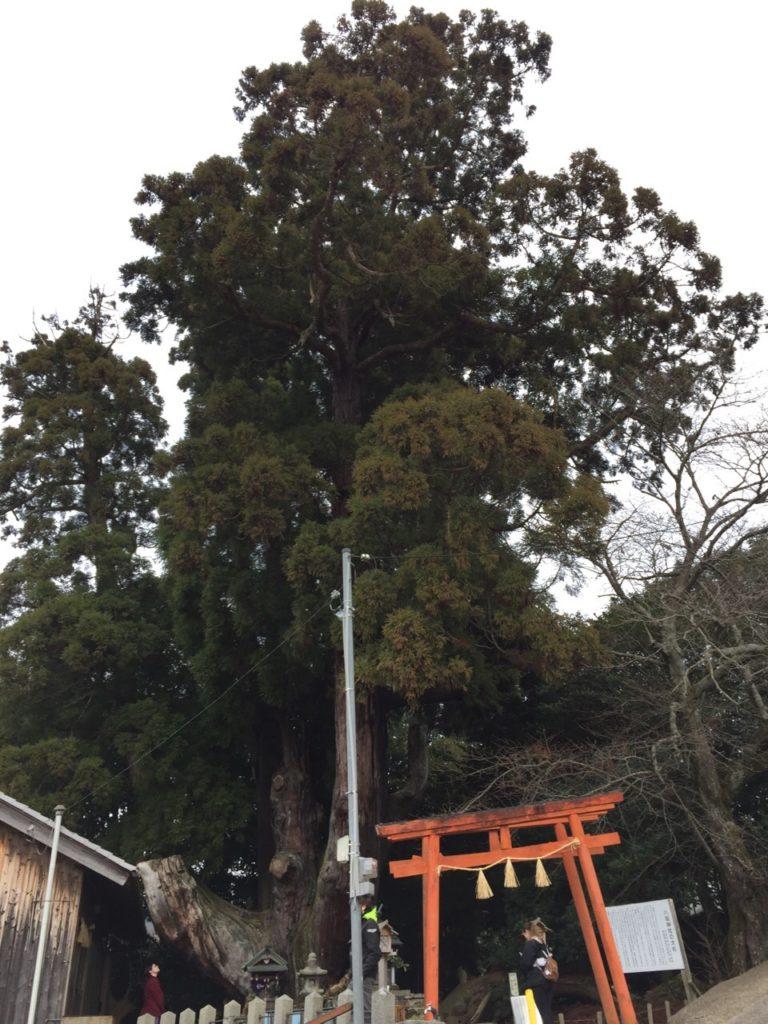 Obubu interns visiting the ancient cedar shrine