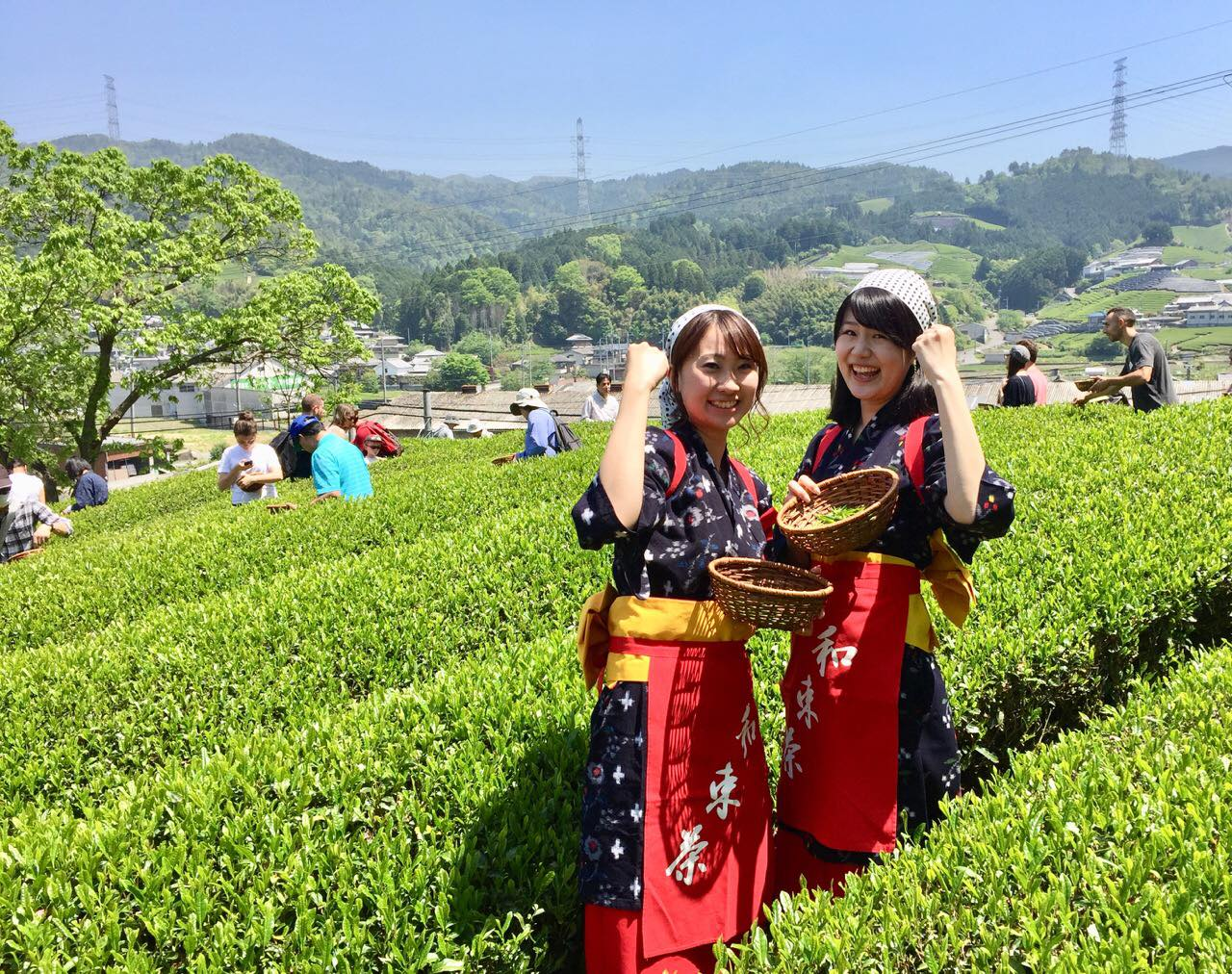 Image result for japanese tea farm